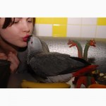 Самый умный попугай. Большой попугай