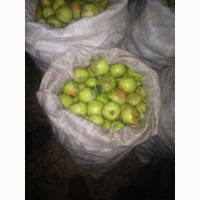 Куплю яблоки на переработку любой регион, дорого