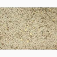Продам семена чечевица(100тонн)