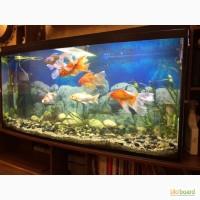 Продам аквариум 420л с оборудованием и подставкой