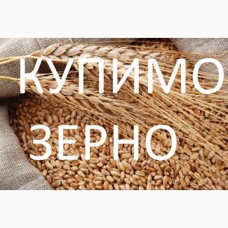 Закуповую зерно пшениці фуражної