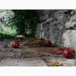 Картина Гранаты холст, масло, 30х40 см
