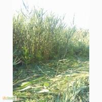 Покос травы: Благоустройство территории, Расчистка от зарослей дачных участков