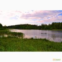 Неймовірно красива природа біля озера. Продаж