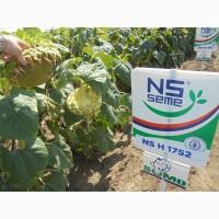 Семена подсолнечника НС-Х-1752 Устойчив к Гранстару, Технология SUMO