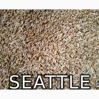 Продам Посевной Ячмень, ячмень яровой «СИЭТЛ» Seattle Канада