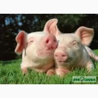 БМВД 15% для свиней від виробника