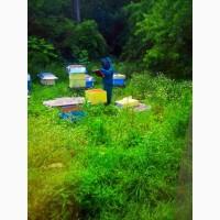 Продам пчелосемью