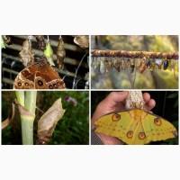 Продажа Живых тропических бабочек более 30 Видов
