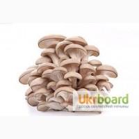 Продаем оптом и врозницу свежие грибы вешенки