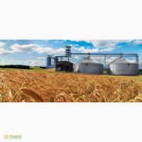 Компания закупает кукурузу сою подсолнечник фуражную 14.2.5/5