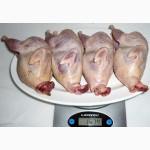 Свежее мясо домашних перепелов