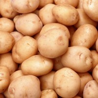 Закупаем картофель второго сорта с отсрочкой платежа