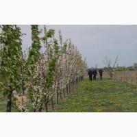 У Польщу на садівництво потрібні працівники