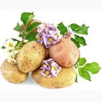 Закупка картофеля высокого качества