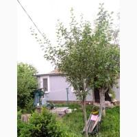 Продаю Свой частный дом, 60 м2, в г.Малая Виска Кировоградской области