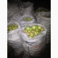 Куплю яблоки на переработку, любая область