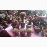 Продам кактусы и суккуленты, флорариумы и композиции