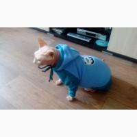Флисовый комбинезон для сфинкса или собаки