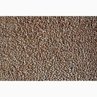 Куплю пшеницу органическую, продовольственную 2 класса