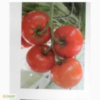 Продам помидоры, купить помидоры тепличные, помидоры свежие, тепличные помидоры