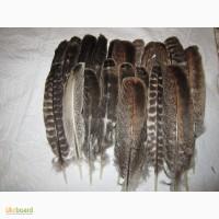 Продам перья индюка, г. Киев