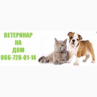 Услуги ветеринара в Харькове