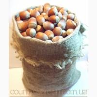 Продам саженцы Фундука и много других растений (опт от 1000 грн)