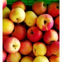Яблоки Галма