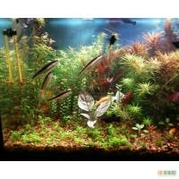 Акавримные растения