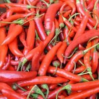 Fresh/Dried Chili/Red Pepper