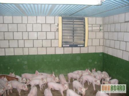 Отопление свинарника своими руками