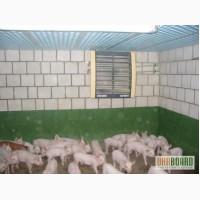 Отопление Свинарника