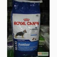 Royal Canin Maxi Junior Макси Юниор Роял Канин корм для щенят крупных пород собак
