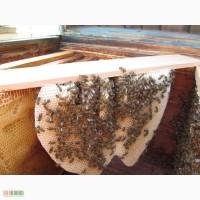 Пчелопакеты, пчелосемьи продам