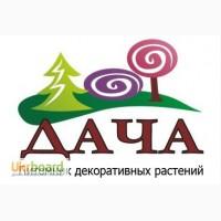 Частный питомник декоративных растений ДАЧА предлагает деревья и кустарники