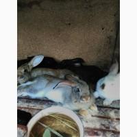 Продам кролей. Харьков
