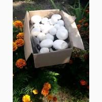 Выращивание грибов на дому