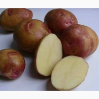 Продают картофель