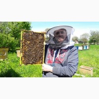 Пчелосемьи, пчелопакеты Карпатка 2019 с Доставкой Запорожье