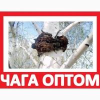 1ОО% ЧАГА ГРИБ Продажа на Экспорт Киев! Купить Корень Солодки Оптом с Квотой Лицензией