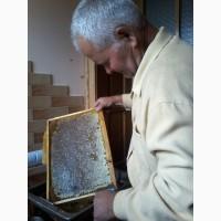 Продам бджоли, бджолосім'ї (пчелосемьи), пакети породи Карпатка, Львівська обл