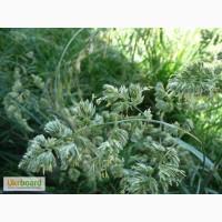 Грястиця збірна (Ежа сборная) - газонна трава - насінний матеріал