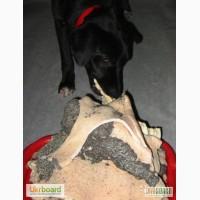 Рубец говяжий (корм для собак)