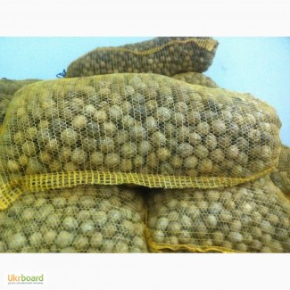Куплю кругляк грецкого ореха 10-16 грн урожай 2018 г