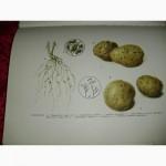 Картофель-2