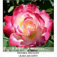 Розы - огромный выбор - саженцы, разные