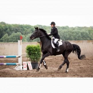 Экскурсия по конному клубу + профессиональный урок верховой езды в крытом манеже