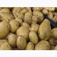 Купимо картоплю