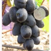 Продажа саженцев винограда в Украине